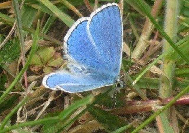 Adonis Blue - Waterhall story SUS-200928-095323001