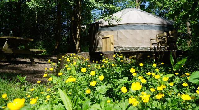 Forest Garden Shovelstrode, secluded luxury camping in yurts and log cabins.