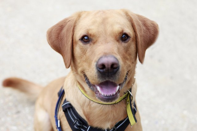 Ricky is an energetic boy with tonnes of love to give