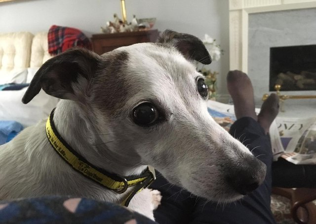 Dylan is settling into his new home after coming into Dogs Trust as a result of the pandemic