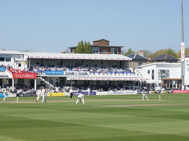 The Hove outfield has been hit by an insect infestation