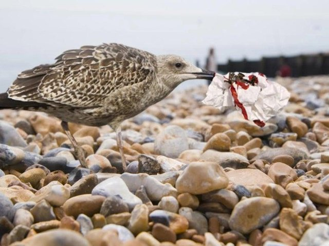 The Eastbourne Herald reported seagulls had been trained to pick up litter