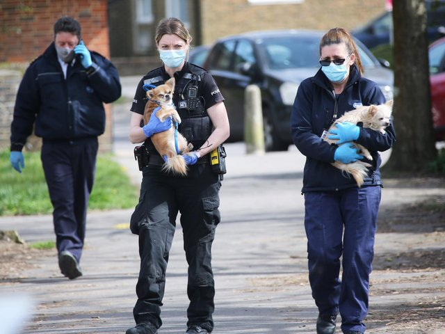 Police carry the animals away