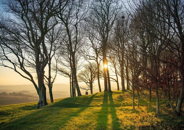 Chanctonbury Ring by Tim Kahane - winner of the 2020 competition