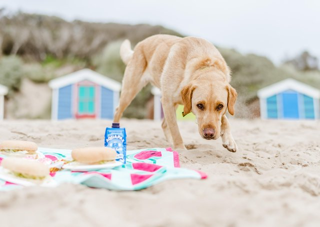 Can you tell what this dog is thinking? Picture: Martin Phelps