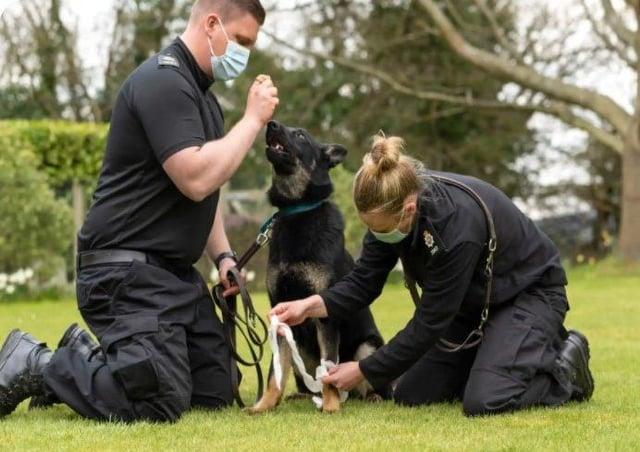Police dog handlers SUS-211005-084636001