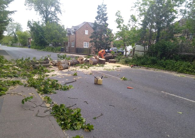 Fallen tree in London Road, Burgess Hill. Picture: Sylvia Knowles