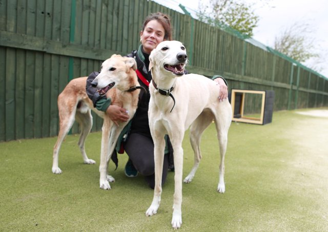 Meet adorable duo Banjo and Dixie, on the lookout for ahome together as a pair