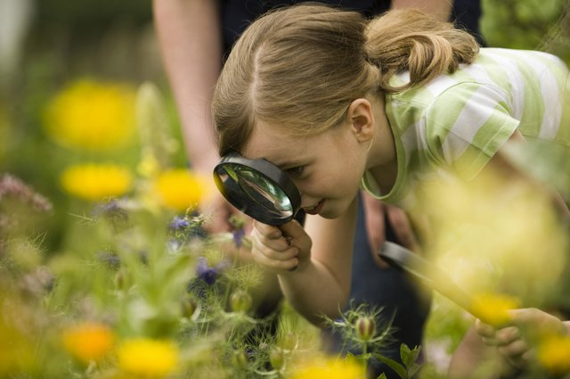 Bug hunts can keep your children entertained. Picture by the National Trust