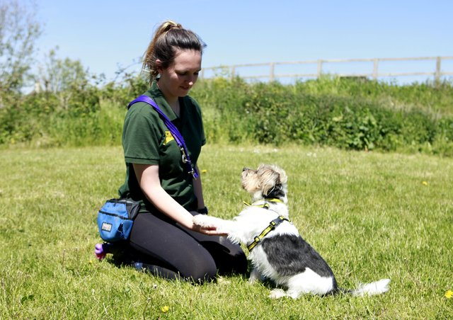 Charlie with Dogs Trust canine carer Alice Maltby