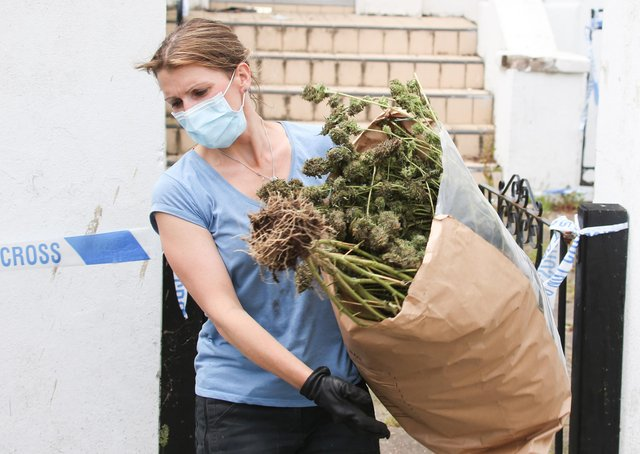 The plants were seized by police