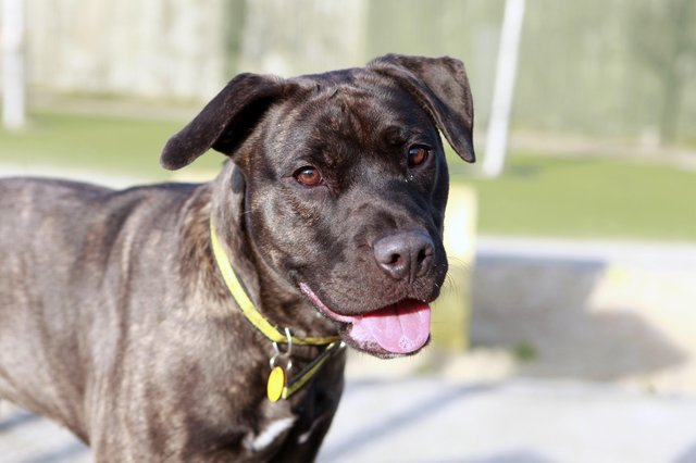 Luna is a clever crossbreed is currently in the process of learning loose-lead walking, focus work and a settle
