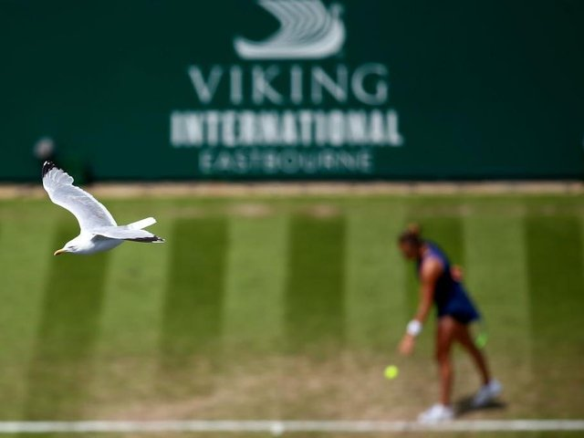 A seagull arrives to see what it is at Devonshire Park / Photo: Getty
