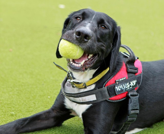 The Dogs Trust Shoreham rehoming centre hopes to find  a family with as much energy and enthusiasm as him
