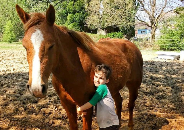 Sessions at Equine Gentling Community Herd can include sitting with horses, grooming them or hugging them.