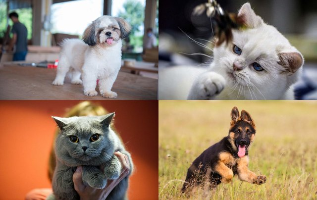 Did your favourite breed make the list?